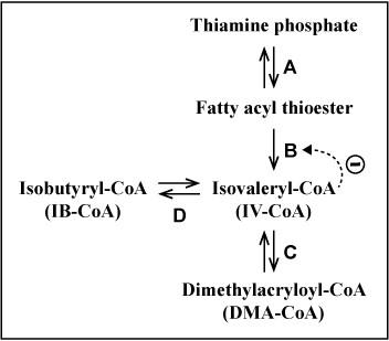 Metabolic Pathway Flux
