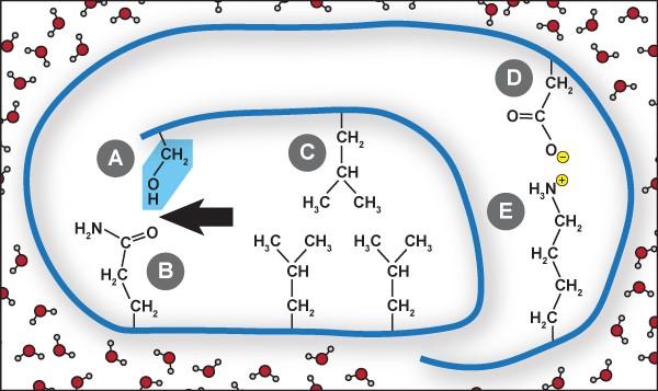 ProteinX Hydrogen Bond